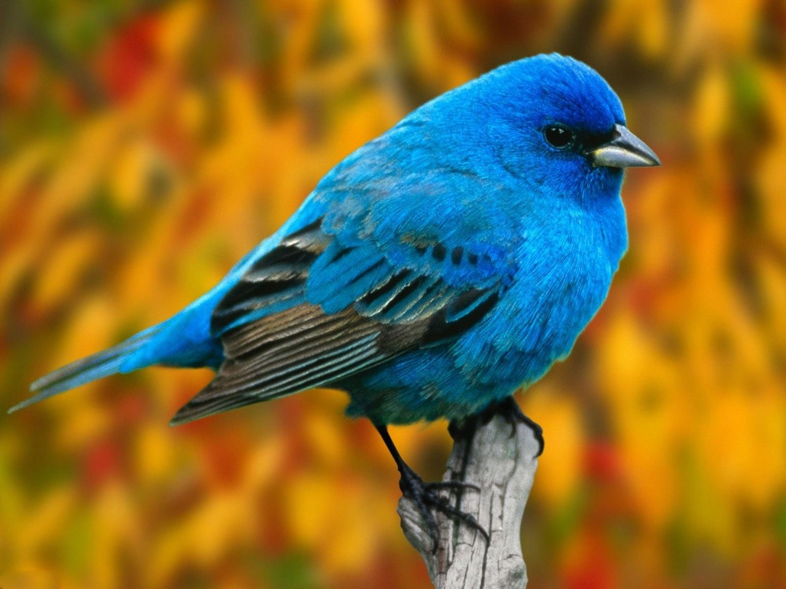 Hd wallpaper android - Free Bird Mobile Hd Wallpaper