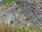 The Devonian Land Plants Arrival And How It Shaped The Earth's Climate Control System
