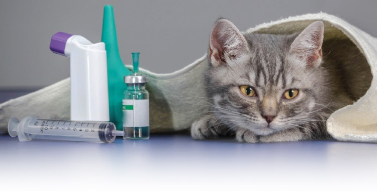 Best pet insurance for pre-existing conditions - Techcoffees