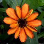 Καλλιεργήθηκε το πρώτο λουλούδι στο διάστημα