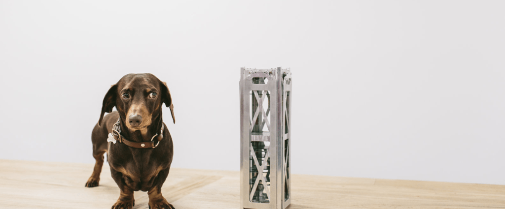 Fleet Nanosatellite dog