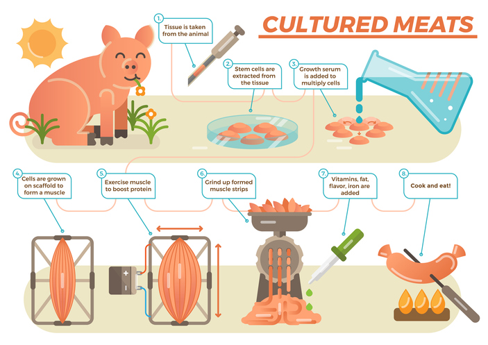 Future Fields is tackling cultured meat's biggest problem GettyImages 857768676