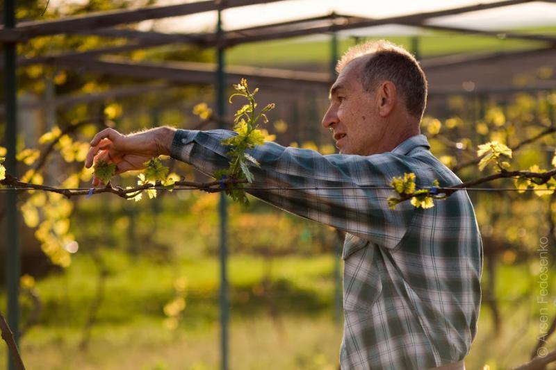 Богдан ПАВЛІЙ: «Виноробство – покликання і справа мого життя»