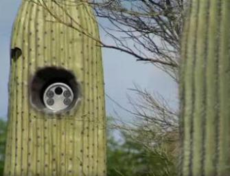 Arizona Town Places Plate-Reading Cameras in Fake Cactuses