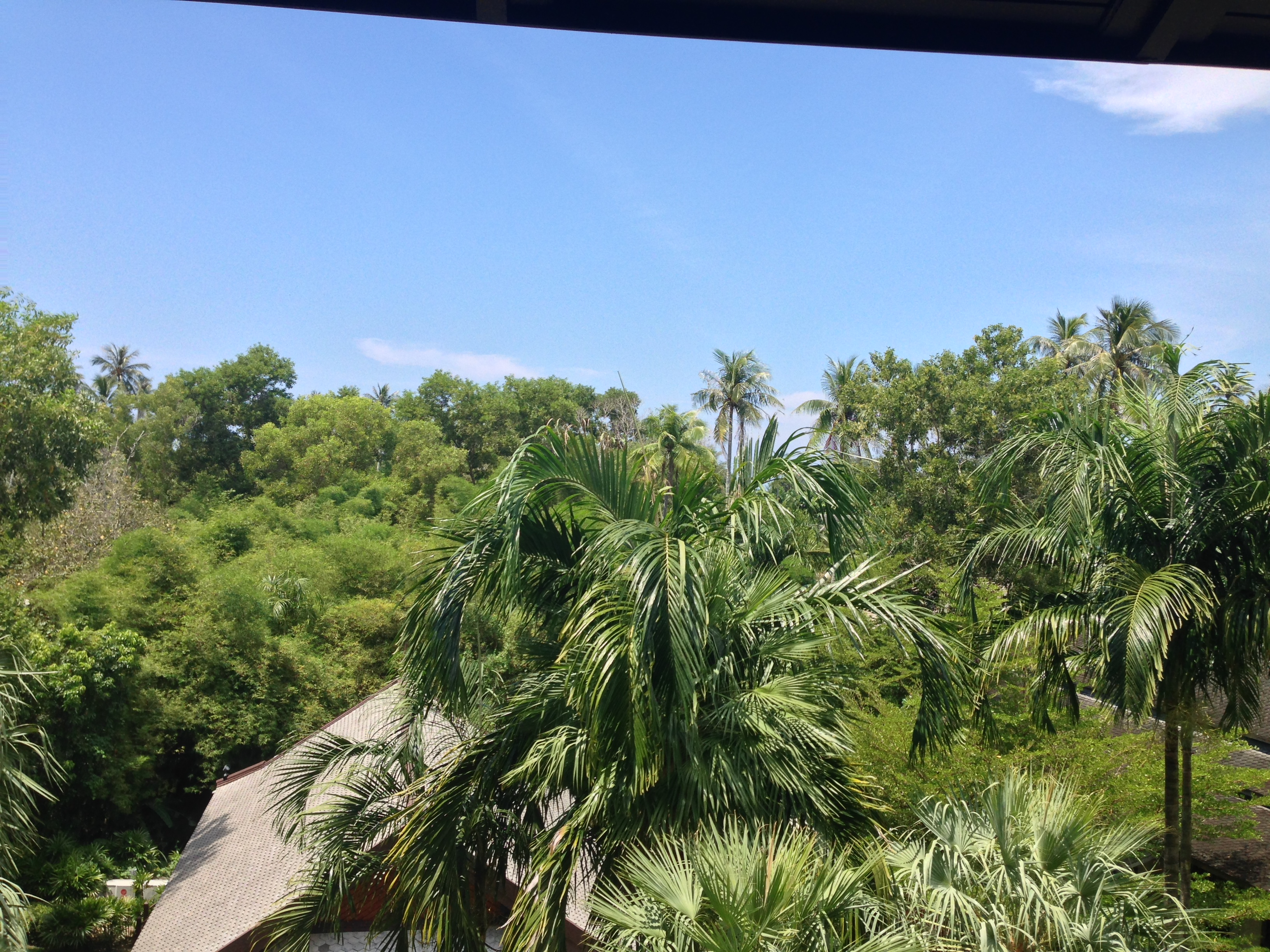 balcony view of palm trees with roof of yoga center