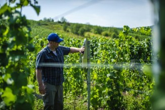 Ericsson, connettività sicura per l'IoT e il settore vinicolo