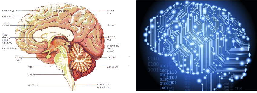 replacing-neurons-with-processors