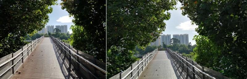 bridge-tree-hdr