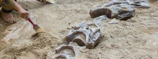 Αναγνωρίστηκε νέο είδος δεινοσαύρων