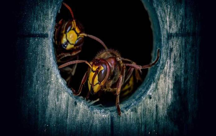 HiddenWasp Malware is Targeting Linux Machines Remotely