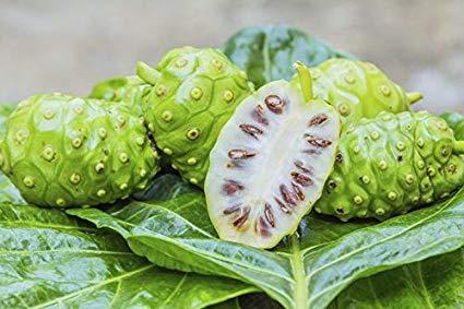 Noni-Plant-in-hindi