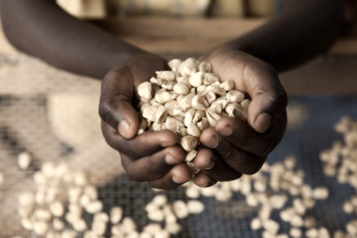 Most Sub-Saharan African countries have improved their food security over the past year