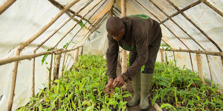 Across West Africa, WAAPP has developed and delivered around 160 climate-smart crop varieties, technologies and techniques to millions of farmers.