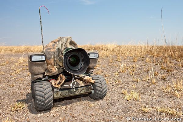 beetlecam photography robot