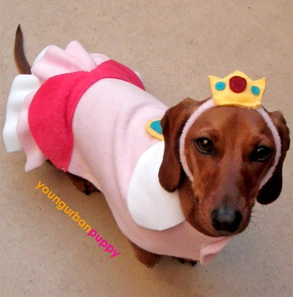 Mario and Princess Peach Dog Cosplay