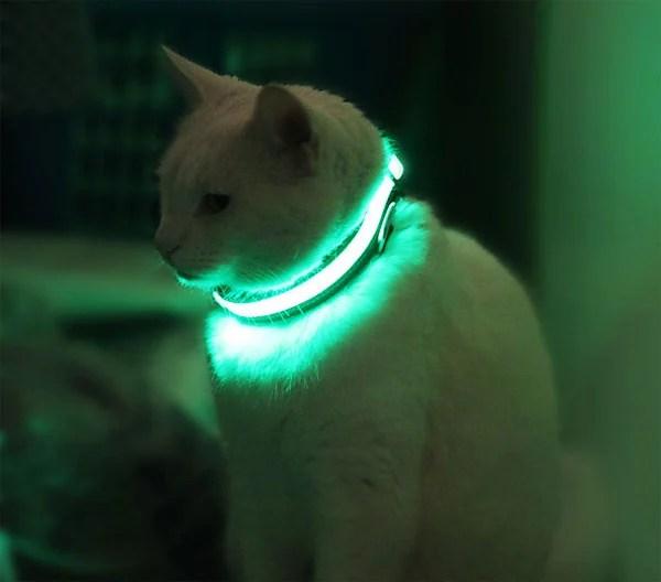 halo mini pet collar kickstarter
