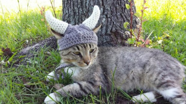 viking_cat_hat_3