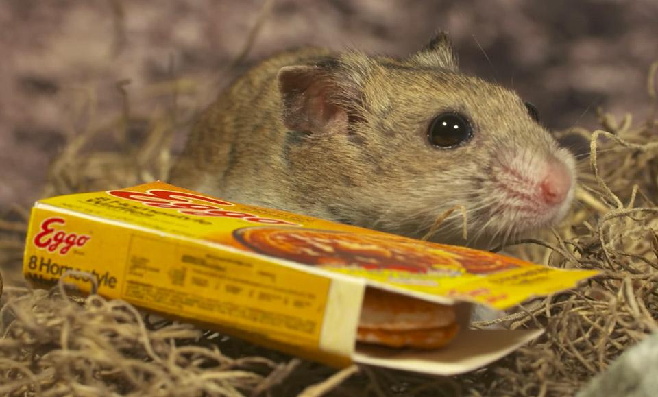 hamster things is stranger
