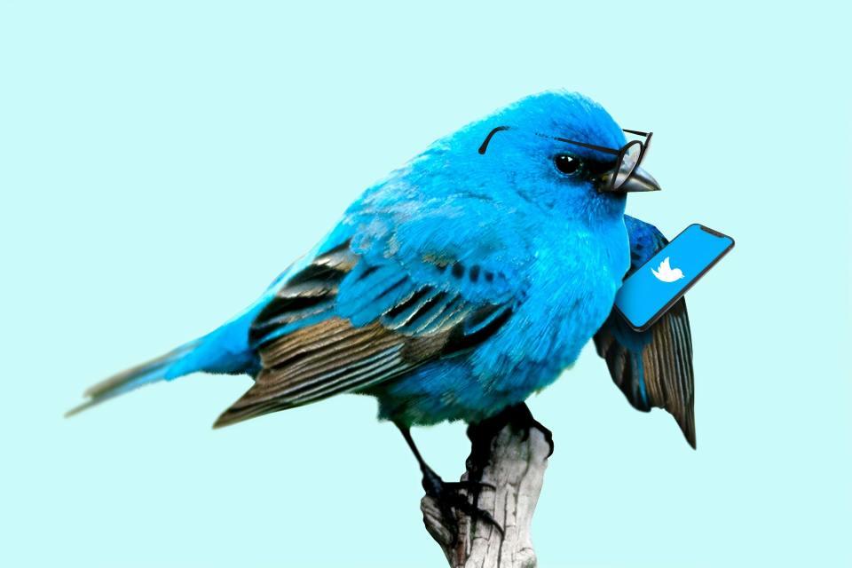 트위터, 유료 구독 모델 고려중?