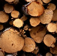 Cut logs (Okko Pyykkö/Flickr)
