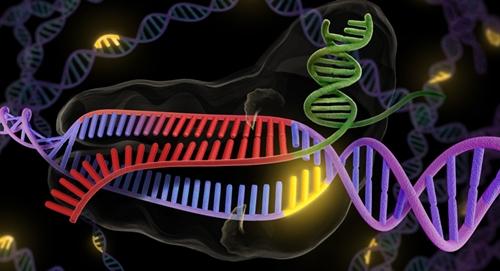 Cas9 protein editing a gene