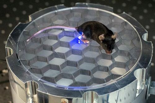 Mouse with optogenetic system