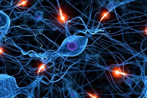 Nerve cells illustration