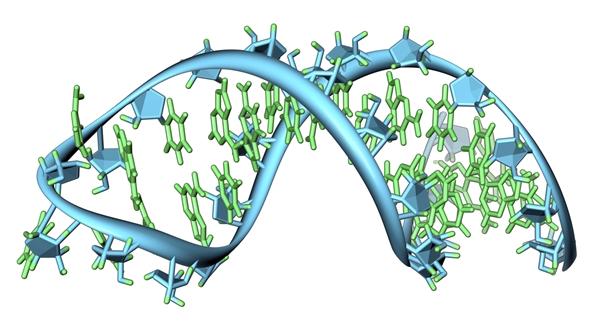 RNA illustration