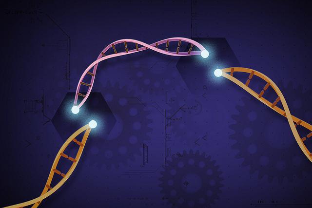 Crispr genome edits illustration
