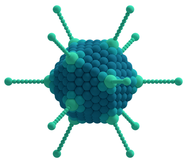 Adenovirus schematic
