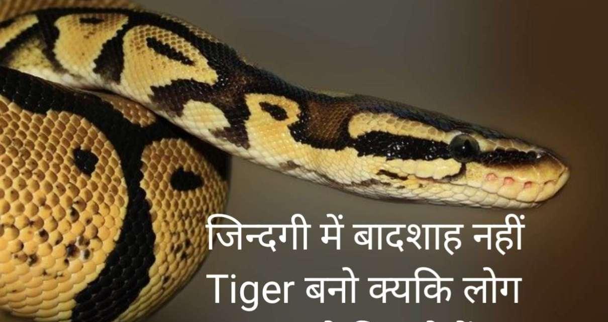 Royal attitude Status Shayari in Hindi