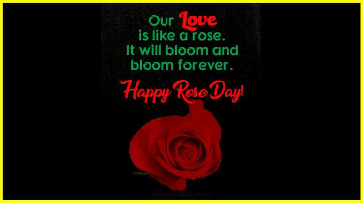 happy rose day quotes, Happy Rose Day Quotes, Images, Status & Love Wishes Messages; rose day unique quotes; rose day quotes in hindi; rose day special quotes for her; happy rose day 2019; happy world rose day; happy rose day 2020 wishes; world rose day quotes; happy rose day quotes for girlfriend in english; rose day unique quotes; happy rose day 2019; rose sms messages; rose day special lines; rose day special quotes for her; happy rose day quotes; happy rose day 2020 wishes; ;happy world rose day; happy rose day 2020 images download; rose day images 2020; rose day pic download; rose images with love messages; happy rose day gif; happy world rose day images; world rose day pic; happy rose day 2020;