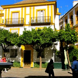 Yellow frames and trees Seville - TN