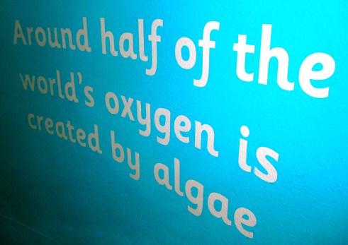 Algae for oxygen