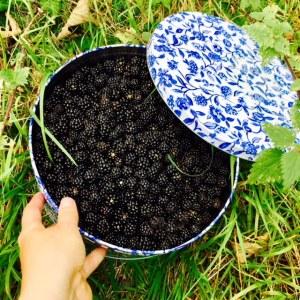 Blackberrys for plenty of jam and cakes