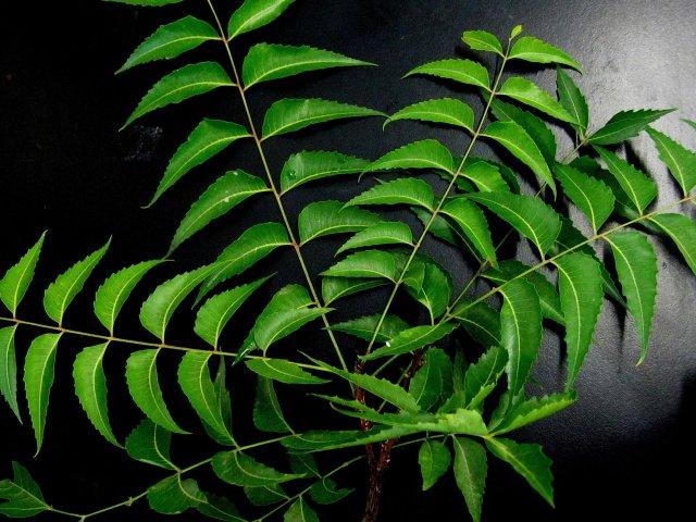 Boosting Herbs to Beat Coronavirus!