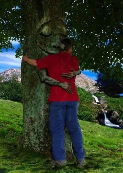 drzewo - Wykorzystaj energię drzew