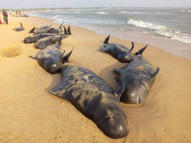 whales tamil nadu wash up