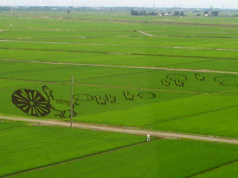 rice paddy cropart 2