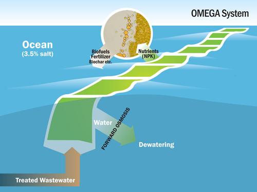 OMEGA Systems - algae