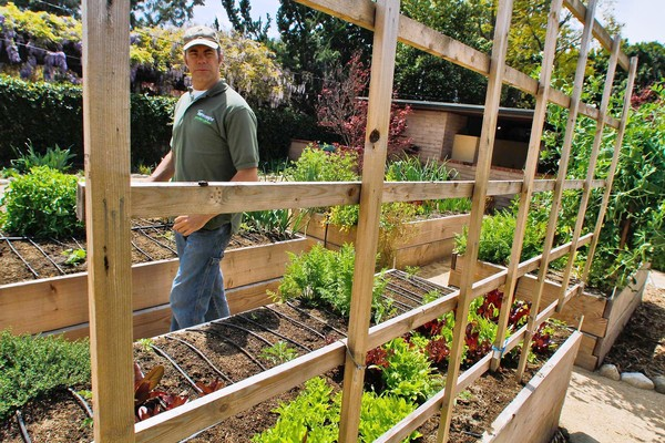 The Rise Of Backyard Farming  Just Another Wordpress Site
