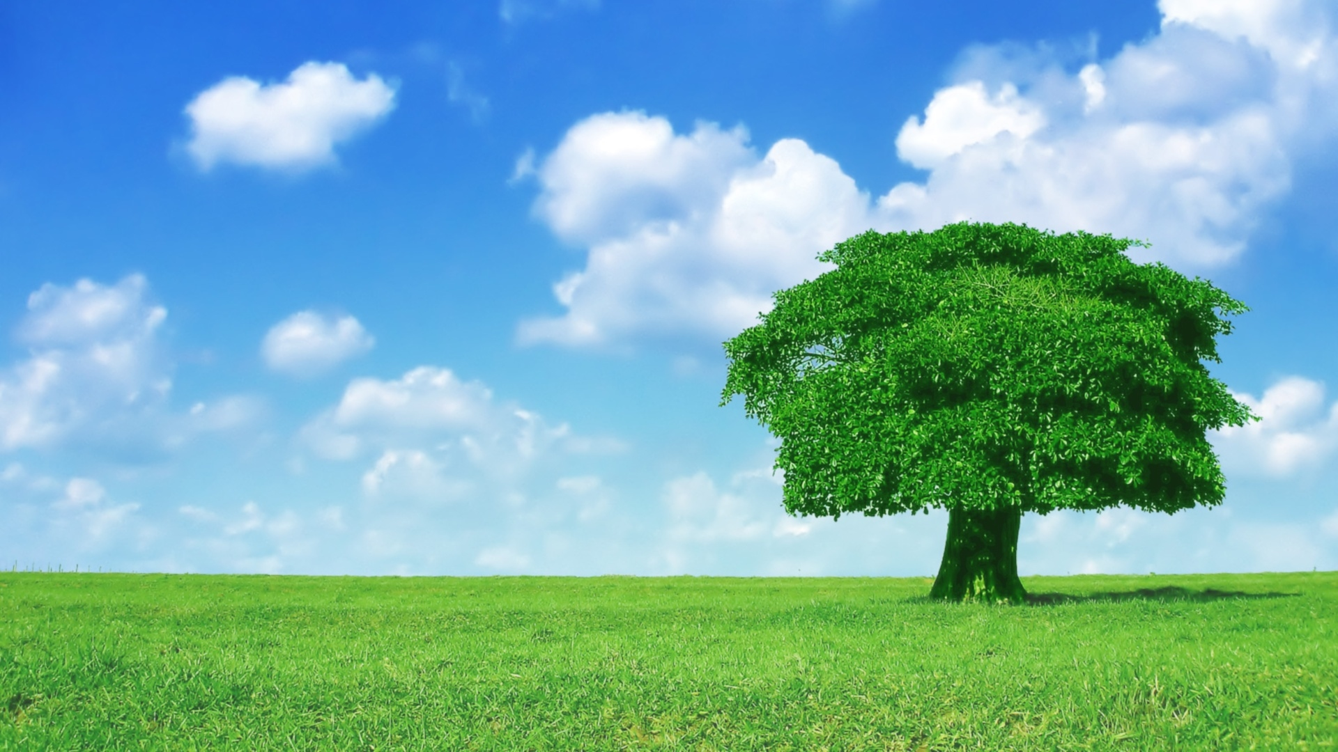 40 Hd Tree Wallpapersbackgrounds For Free Download