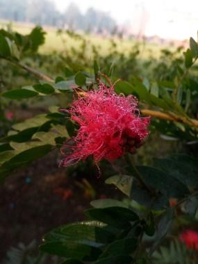 Macro Shot of flower(Dews)