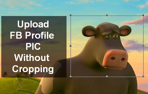 how to set profile picture without cropping