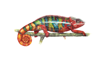 Become a Communications Chameleon