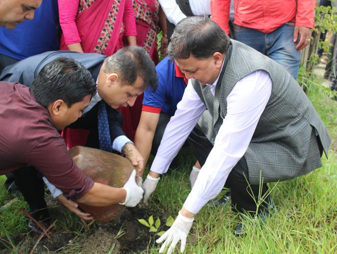 माछापुच्छ्रे बैंकद्वारा वृक्षारोपण कार्यक्रम