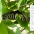 JPEGView 1.0.30 免安裝中文版 – 支援Unicode的免費看圖軟體