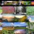 世界地球日 Google 與 TIME 讓大家一起記錄我的美麗地球