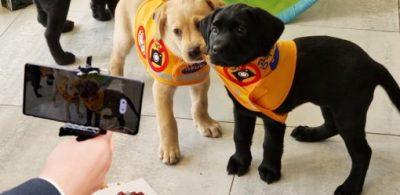 【以Galaxy S21系列捕捉世界】《國際導盲犬日》致敬地表最強「萌」友!