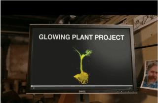 glowing plants